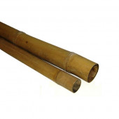 Bambou tige